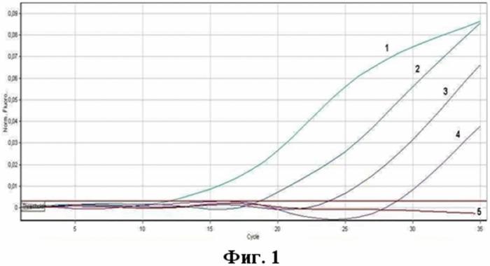 Набор олигодезоксирибонуклеотидных праймеров и флуоресцентно-меченного зонда для идентификации рнк коронавируса человека, ассоциированного с тяжелым острым респираторным синдромом