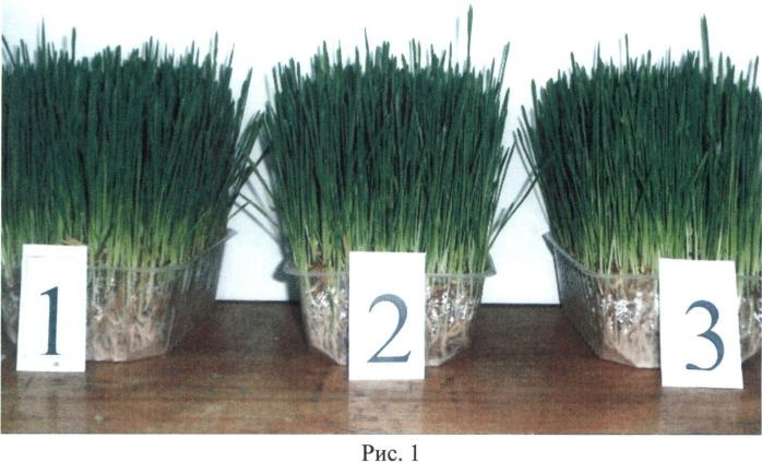 Способ выращивания зеленой гидропонной кормовой добавки с использованием глауконита