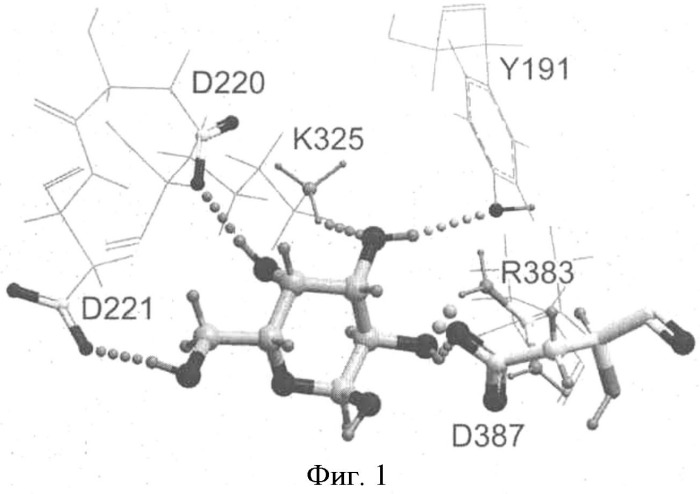 Альфа-d-галактозидазы, обладающие измененной региоспецифичностью, и способ их получения