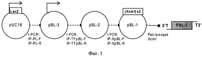 Нетранскрибируемый плазмидный вектор pbl-t для клонирования сложных геномных последовательностей и многомодульной сборки генно-инженерных конструкций (варианты), и набор, содержащий указанный вектор