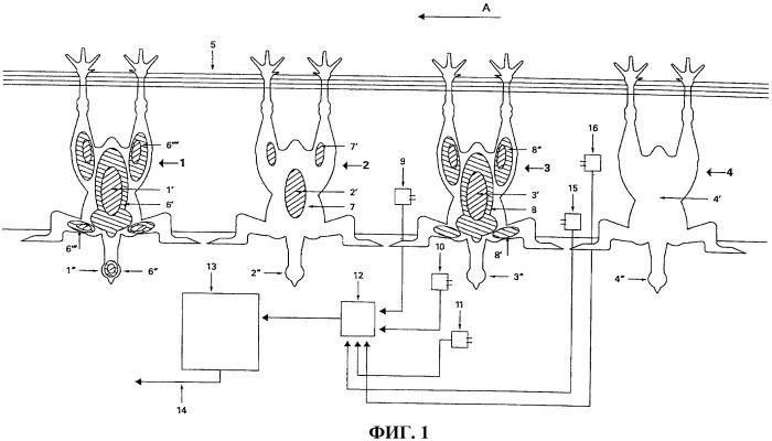 Способ и устройство для обработки забитой птицы