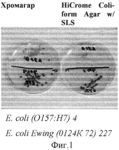Сухая хромогенная питательная среда для обнаружения колиформных бактерий и e.coli (варианты)