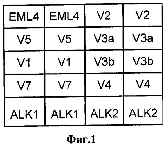 Способ анализа транслокаций eml4-alk, ассоциированных с чувствительностью рака легкого к противоопухолевой таргетной терапии