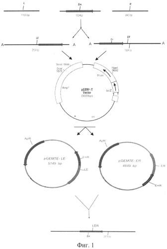 Штамм бактерий bacillus pumilus мк-10 с низкой протеолитической активностью и его применение