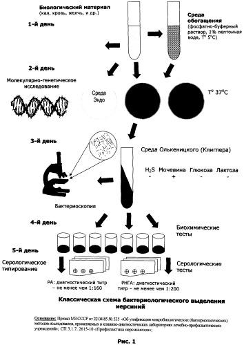 Дифференциально-диагностическая питательная среда для идентификации бактерий рода yersinia