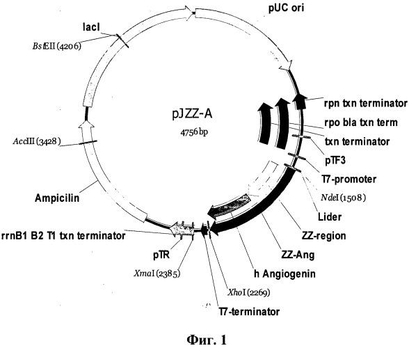 Искусственный ген, кодирующий химерный белок ангиогенина человека, химерная плазмида pjzz-a, обеспечивающая экспрессию гена химерного белка ангиогенина человека в escherichia coli и штамм escherichia coli bl21(de3)/pjzz-a-продуцент рекомбинантного химерного белка ангиогенина человека