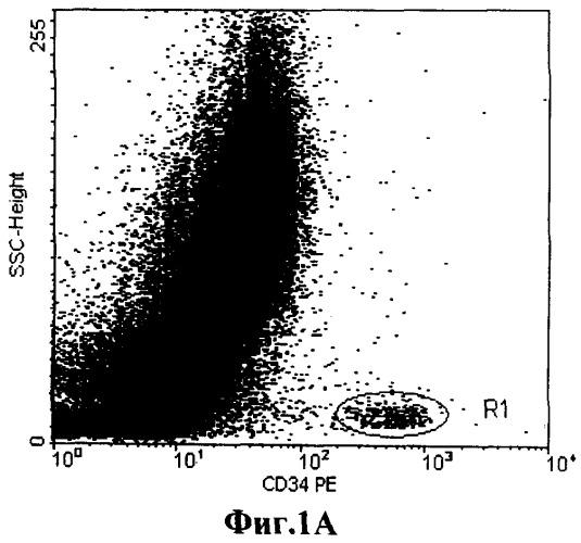 Способ количественного определения клеток-предшественников (cd34+) в кроветворной ткани
