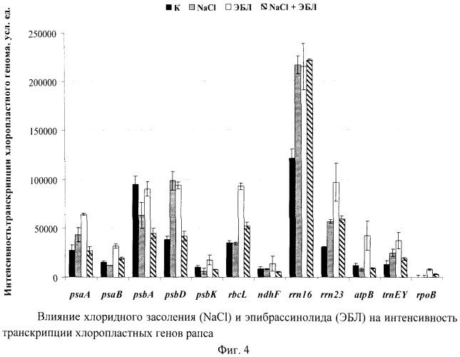 Способ стабилизации транскрипции хлоропластных генов рапса в условиях хлоридного засоления