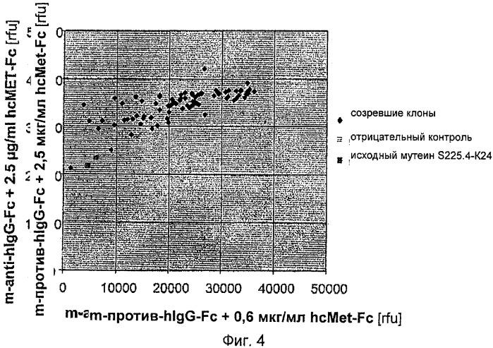 Мутеины липокалина слезной жидкости, обладающие аффинностью к с-мет рецепторной тирозинкиназе человека и способы их получения