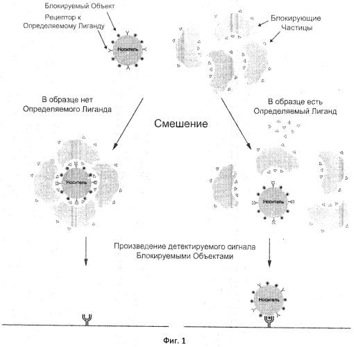 Способ определения содержания лиганда в образце (варианты)