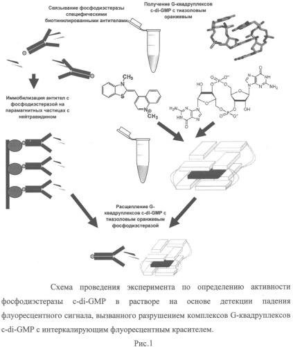 Способ определения неспецифической устойчивости патогенных микроогранизмов к антибиотикам на основании измерения каталитической активности фосфодиэстераз, расщепляющих циклический дигуанозинмонофосфат