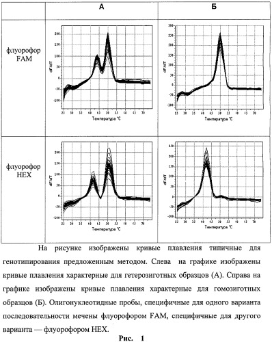 Способ определения генотипа человека по полиморфизму в гене коллагена ii типа col2a1 c>a (rs1635529)