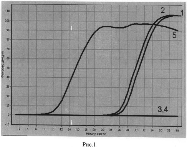 Способ идентификации и оценки количества микробных клеток возбудителя чумы в исследуемых пробах посредством пцр в режиме реального времени
