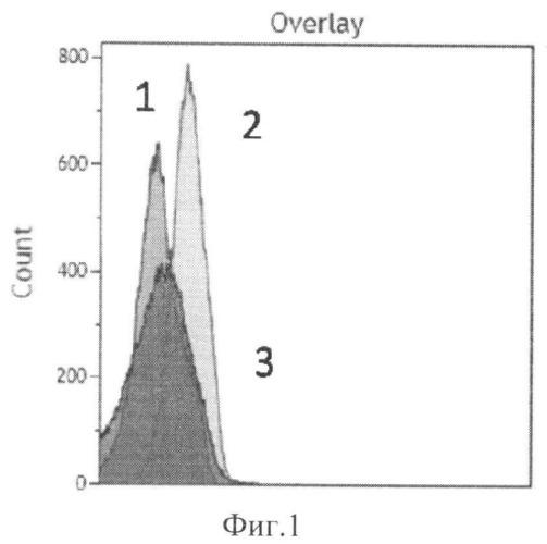Способ селекции аптамеров к заданным белковым мишеням на поверхности клеток