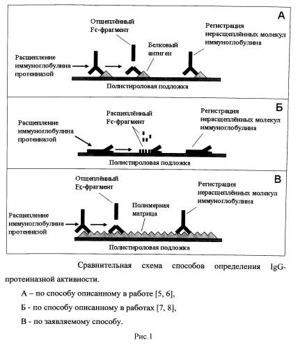 Высокочувствительный способ определения иммуноглобулин-протеиназной активности с использованием полимерных матриц