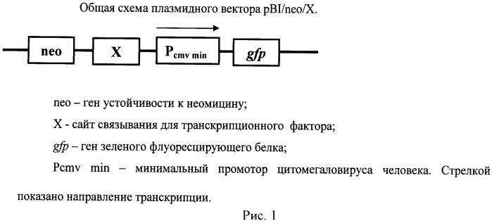 Способ определения активности транскрипционных факторов