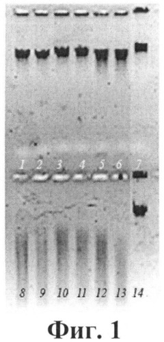 Штамм бактерий aeromonas bestiarum - продуцент щелочной рибонуклеазы, обладающий противовирусной активностью