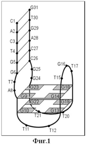 Комбинаторный способ получения днк-аптамерных ингибиторов тромбина и аптамерные олигонуклеотиды (варианты)