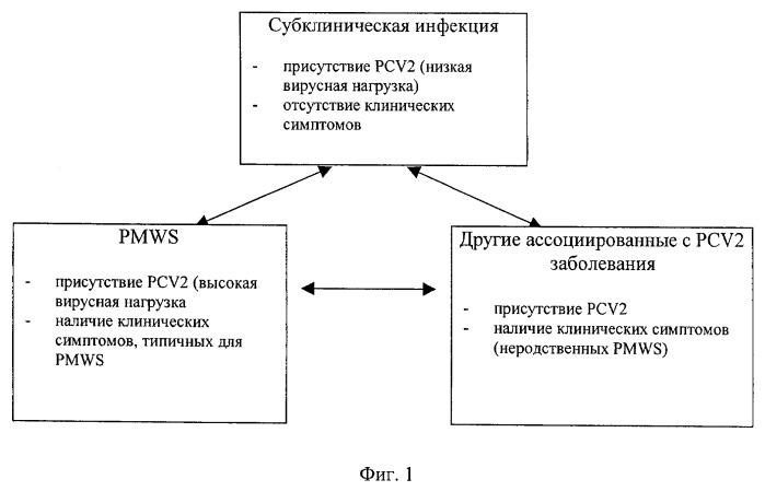 Предупреждение и лечение субклинической формы болезней, вызываемых цирковирусом свиней (pcvd)
