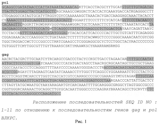 Способ выявления вируса лейкоза крс по нуклеотидным последовательностям консервативных областей вирусного генома