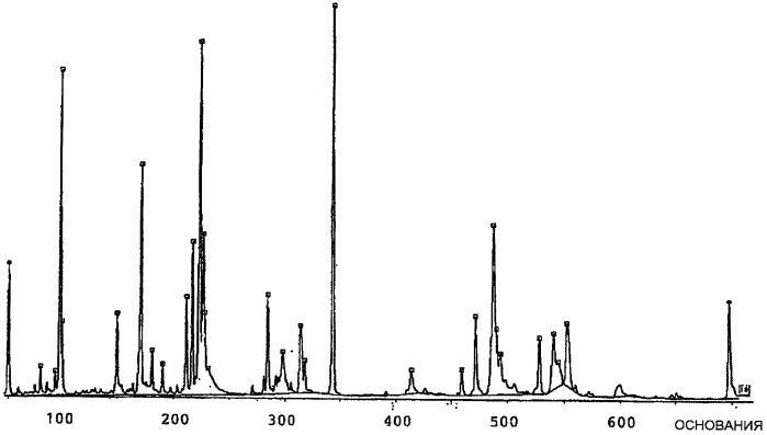 Применение lactobacillus plantarum для повышения бактериального разнообразия