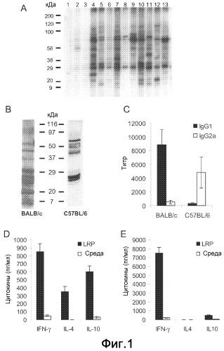 Вакцина, содержащая экстракт рибосомного белка (rpe) и th1- активирующий адъювант
