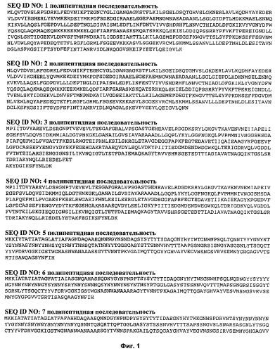 Иммуногенная композиция для применения в вакцинации против стафилококков