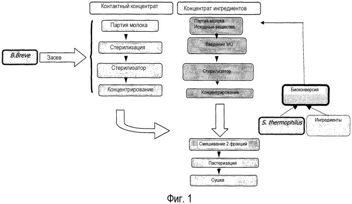 Применение штамма вifidobacterium для получения композиции, предназначенной для профилактики и/или лечения проявлений аллергического типа