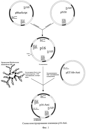 Способ синтеза n-замещенных акриламидов и рекомбинантный штамм rhodococcus erythropolis для его осуществления (варианты)