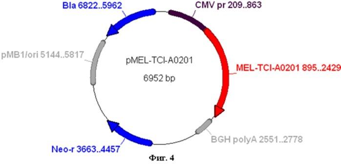 Искусственный ген mel-tci-a0201, кодирующий полиэпитопный белок-иммуноген mel-tci-a0201, рекомбинантная плазмидная днк pmel-tci-a0201, обеспечивающая экспрессию искусственного гена mel-tci-a0201 и искусственный белок-иммуноген mel-tci-a0201, содержащий множественные ctl- и th-эпитопы антигенов меланомы