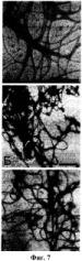 Способ получения наноструктурированного материала на основе рекомбинантных жгутиков архей