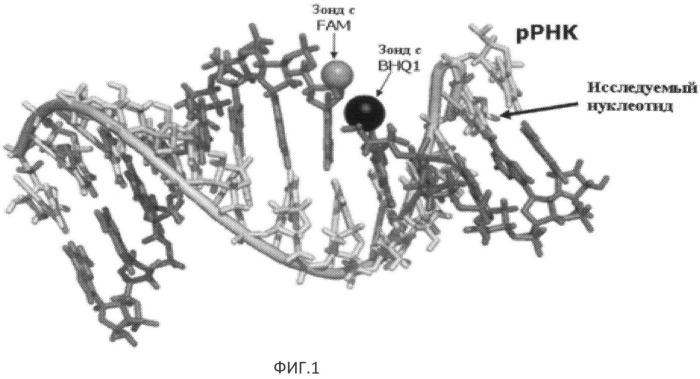 Способ определения модифицированных нуклеотидов рнк