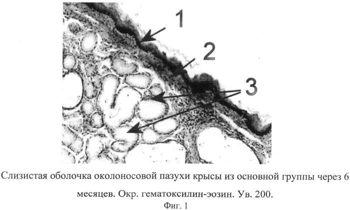 Способ экспериментального моделирования воспаления в околоносовых пазухах при хроническом табакокурении у крыс