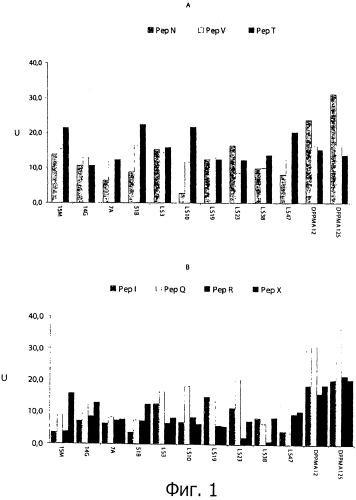 Штамм молочнокислых бактерий (варианты) для полного разложения глютена в муке и его использование