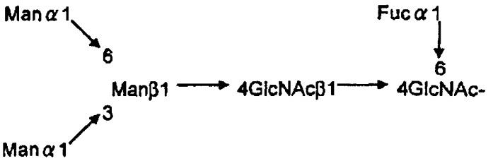 L-фукоза α1→6 специфичный лектин