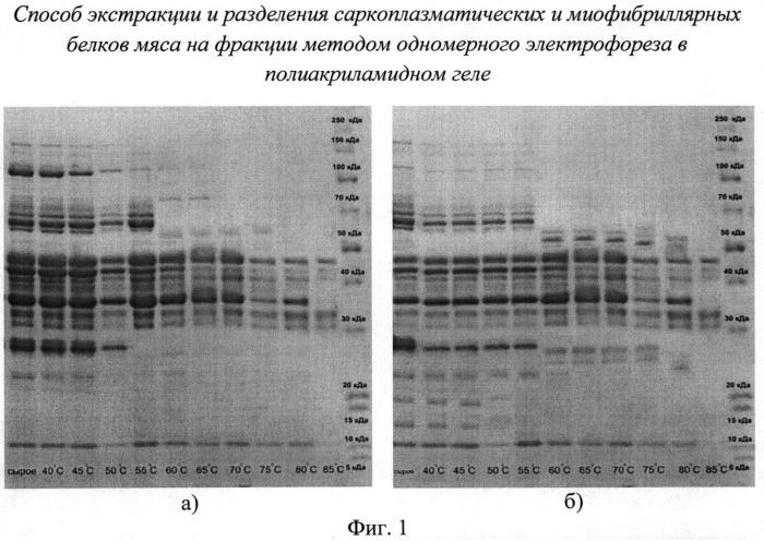 Способ экстракции и разделения саркоплазматических и миофибриллярных белков мяса на фракции методом одномерного электрофореза в полиакриламидном геле