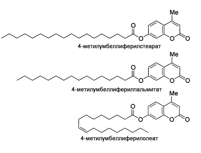 Гидролазы, кодирующие их нуклеиновые кислоты и способы их получения и применения
