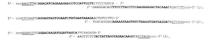 Способ получения кассетных генетических конструкций, экспрессирующих несколько рнк-шпилек