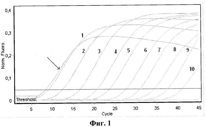 Набор олигонуклеотидных праймеров и флуоресцентномеченого зонда для видоспецифичной экспресс-идентификации рнк вируса мачупо методом полимеразной цепной реакции в реальном времени