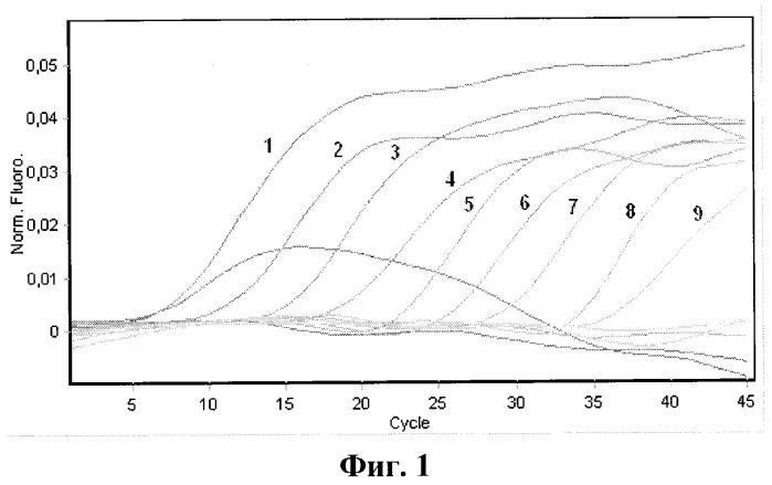 Набор олигонуклеотидных праймеров и флуоресцентномеченого зонда для видоспецифичной экспресс-идентификации рнк вируса хунин методом полимеразной цепной реакции в реальном времени