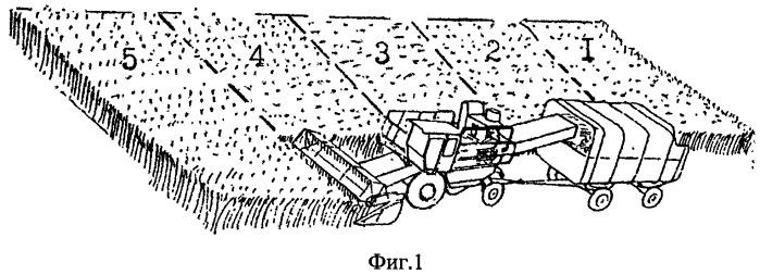 Способ возделывания зерносенажа из высокобелковых культур на малых площадях