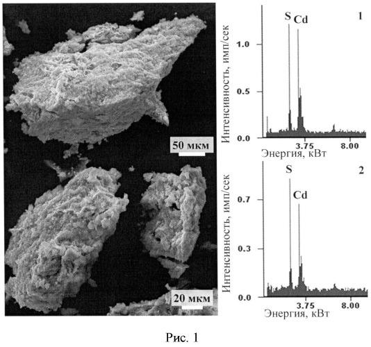 Способ получения сульфида кадмия с использованием сульфатредуцирующих бактерий
