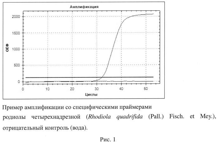 Набор синтетических олигонуклеитидов для выявления видовой принадлежности родиолы четырехнадрезной (rhodiola quadrifida (pall.) fisch. et mey.)