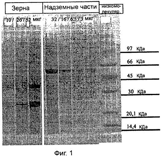 Гипоаллергенная дерматологическая композиция
