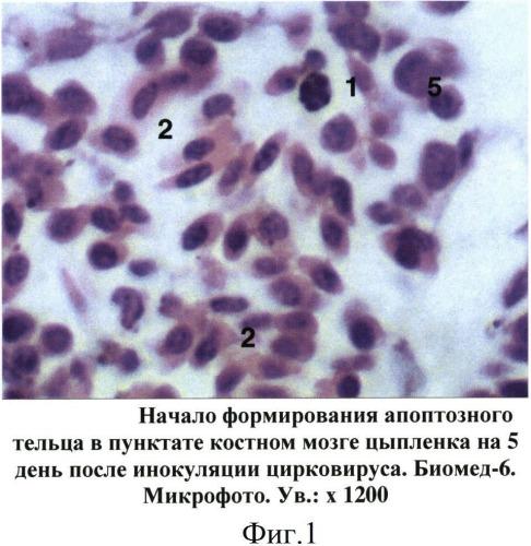 Способ прижизненной диагностики латентного течения инфекционной анемии цыплят