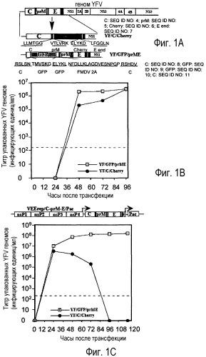 Флавивирус с двухкомпонентным геномом и его использование