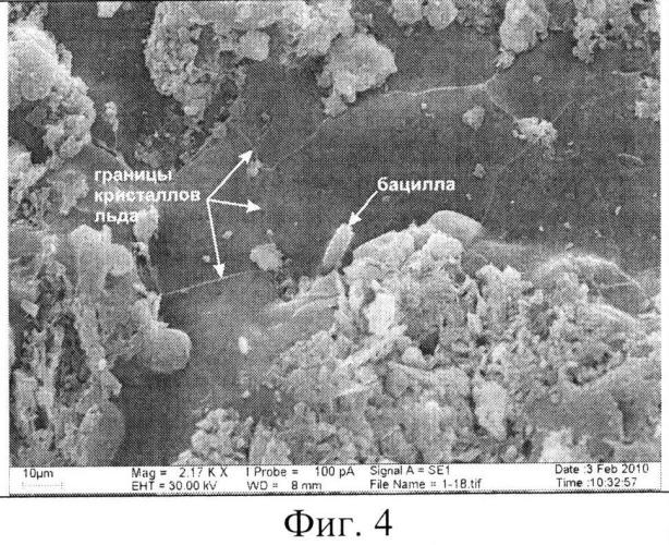 Способ изготовления реплик для исследования микростроения мерзлых пород в растровом электронном микроскопе