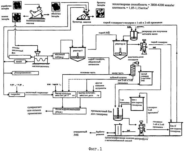 Комплексный способ производства метилового эфира ятрофы и сопутствующих продуктов