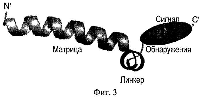 Способ получения пептидов, специфично распознающих определенные типы клеток и предназначенных для терапевтических целей