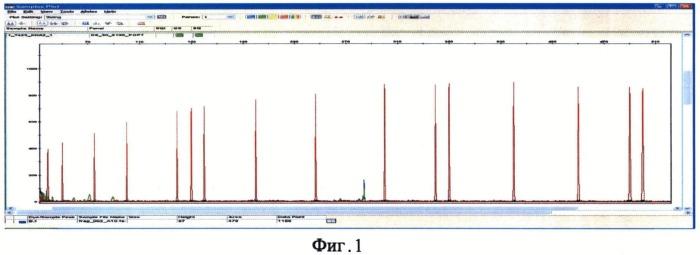 Синтетические олигонуклеотидные праймеры и способ выявления генотипов для идентификации личности с помощью системы микросателлитных днк-маркеров y-хромосомы